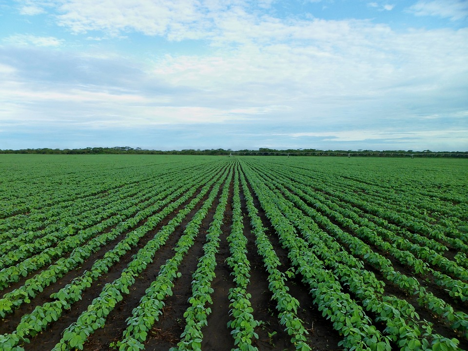 Farm Economy Seeks Footing